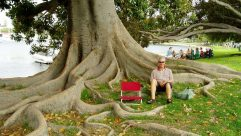 cropped-davo-at-pepp-grove-under-moreton-bay-fig3.jpg